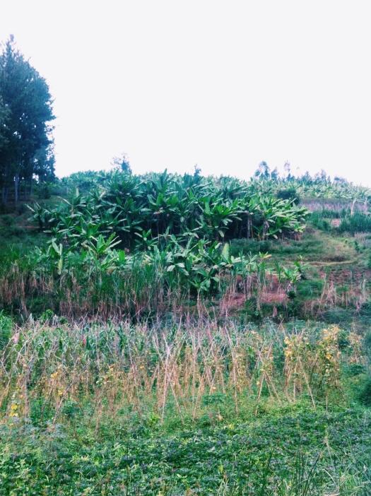 Ngororero, Rwanda